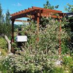 色とりどりの花の中のパーゴラ【ウエスタンレッドシダー施工例 s20200622-1】